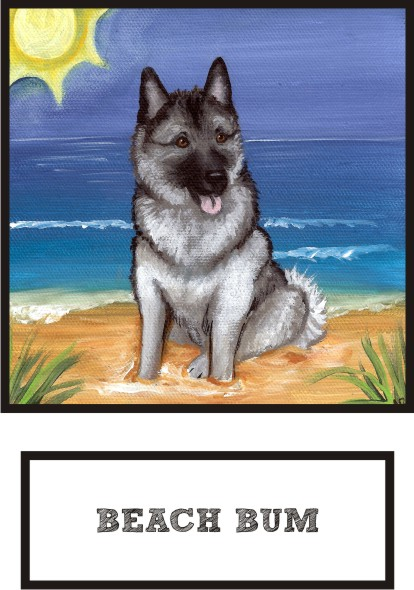 beach-bum-norwegian-elkhound-thumb.jpg