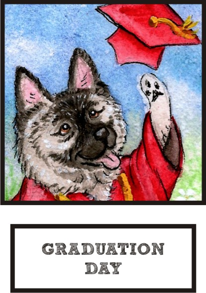 graduation-day-norwegian-elkhound-thumb.jpg