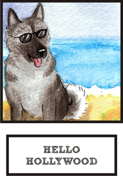 hello-hollywood-norwegian-elkhound-thumb.jpg