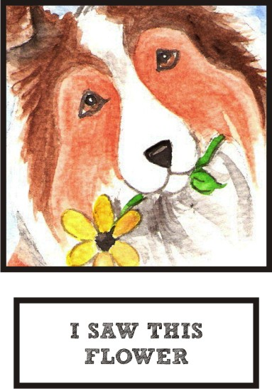 i-saw-this-flower-sable-sheltie-thumb.jpg