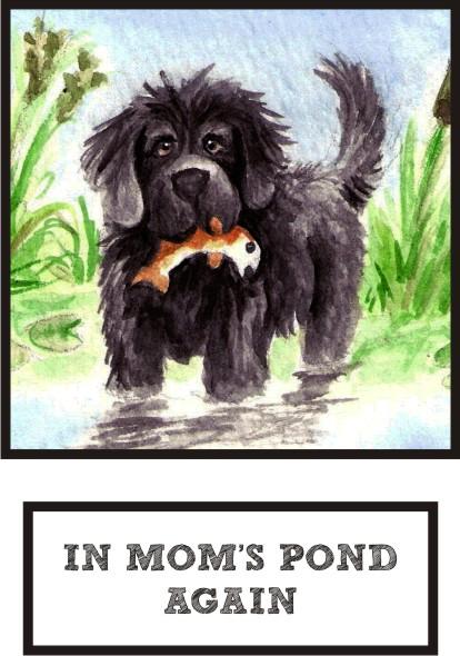 in-mom-s-pond-again-black-newf-thumb.jpg