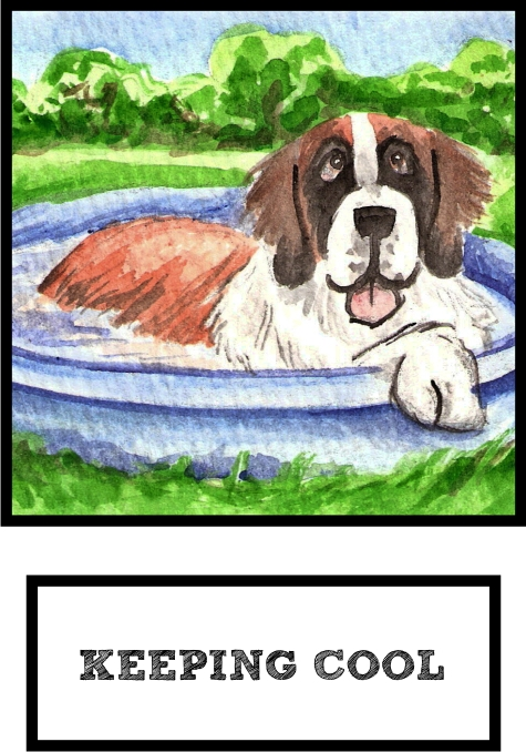 keeping-cool-saint-bernard-thumb.jpg