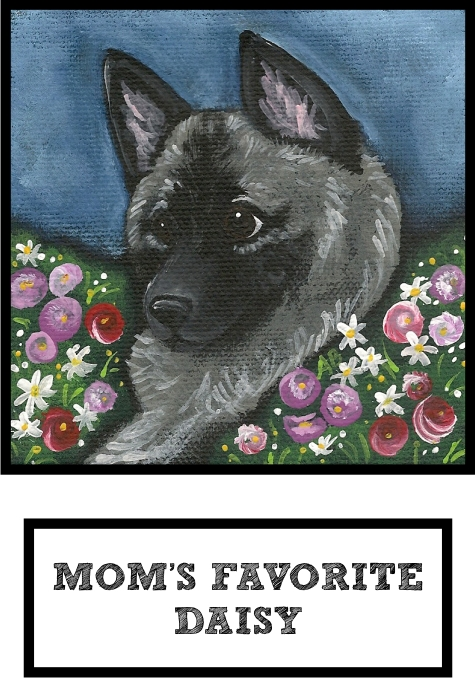 moms-favorite-daisy-norwegian-elkhound-thumb.jpg