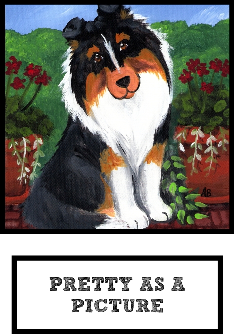 pretty-as-a-picture-tri-color-sheltie-thumb.jpg