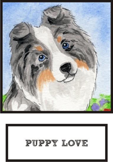 puppy-love-blue-merle-sheltie-thumb.jpg