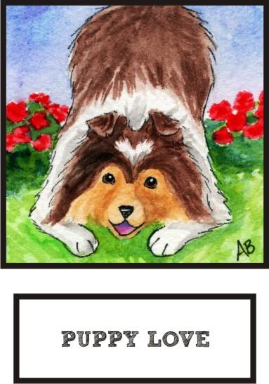 puppy-love-sable-sheltie-thumb.jpg