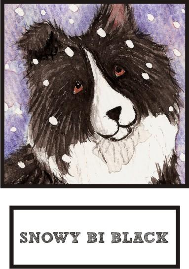 snowy-bi-black-sheltie-thumb.jpg