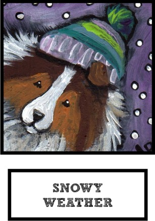 snowy-weather-sable-sheltie-thumb.jpg