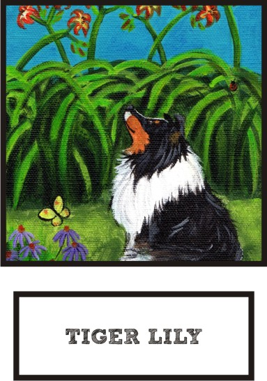 tiger-lily-tri-color-sheltie-thumb.jpg
